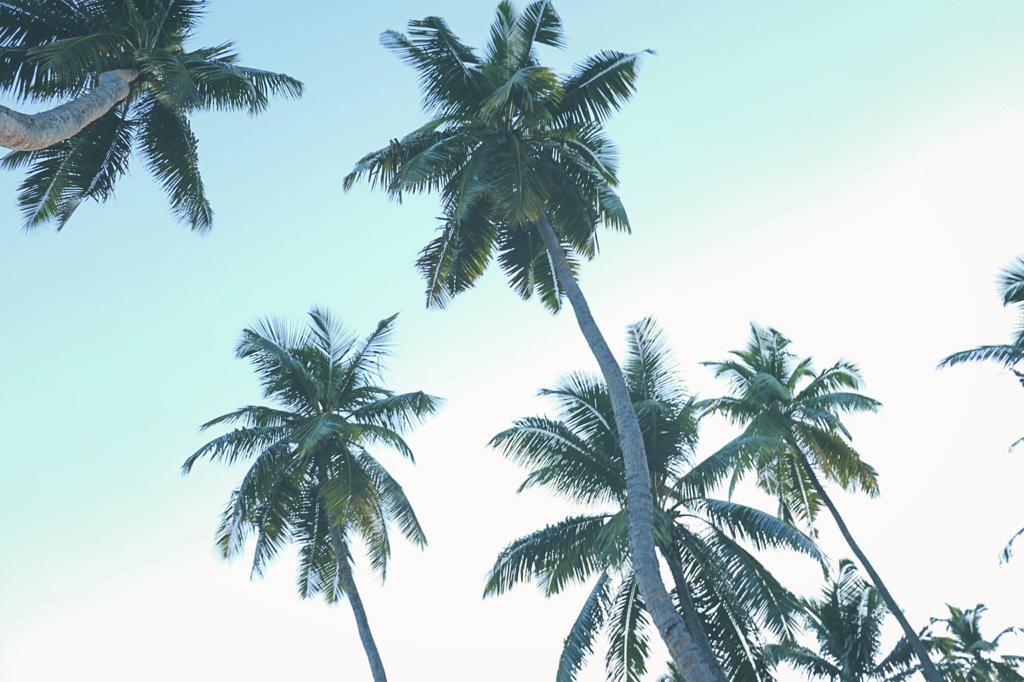 palmiers-seychelles-photos-ciel