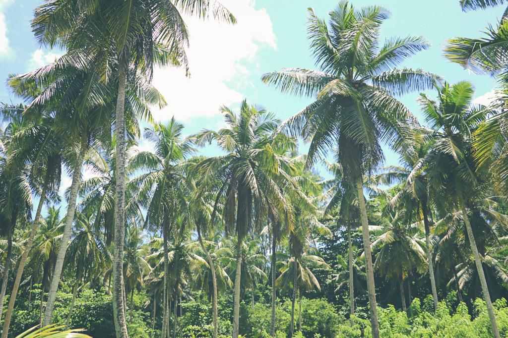 palmiers-seychelles