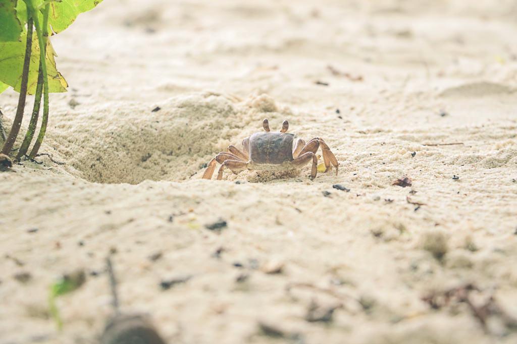 photo-de-crabe-vacances-seychelles-lebarboteur