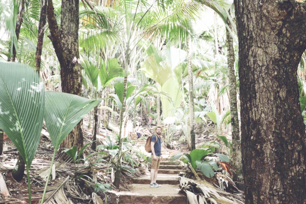 vallee-de-mai-praslin-seychelles-le-barboteur