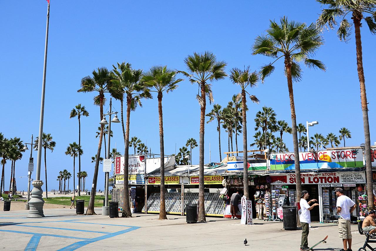 venice-beach-palm