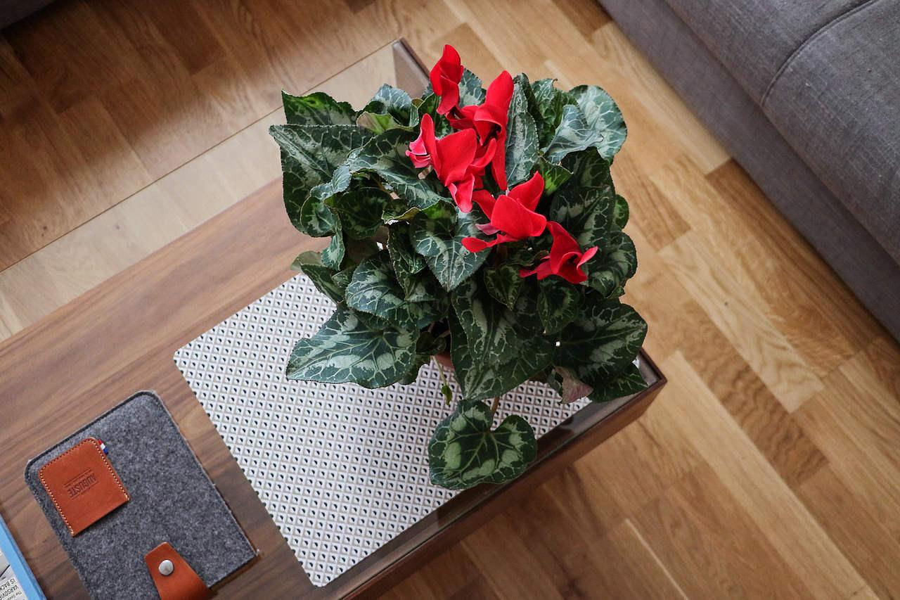 fleur-decoration-salon