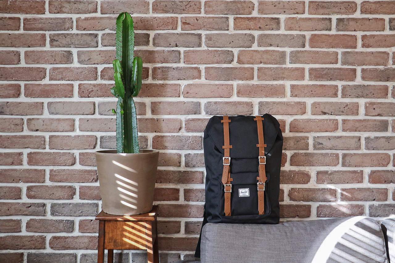 sac-herschel-cactus